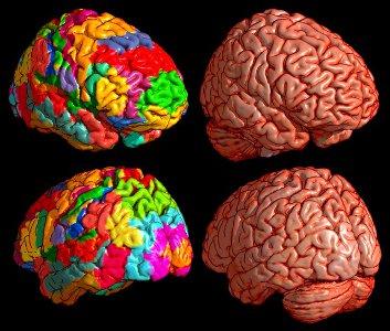Мозг человека в 3-D