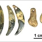 Первые костяные орудия неандертальцев послужили примером для наших предков
