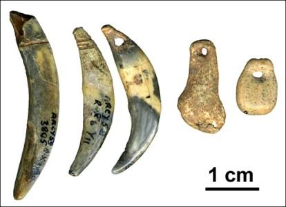 Первые костяные орудия неандертальцев