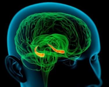 Белок памяти в мозге человека