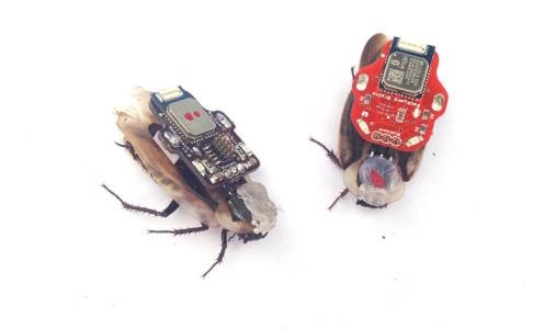 Тараканы-киборги