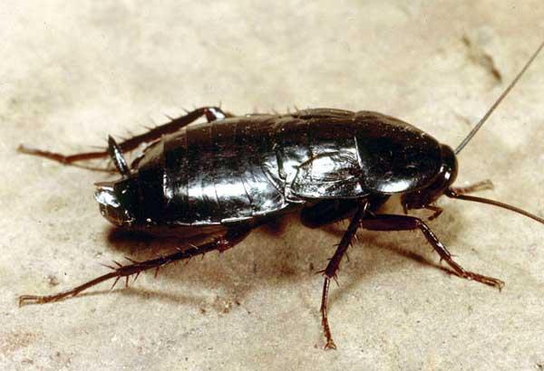 тараканы 10 лет назад 10й класс слушать