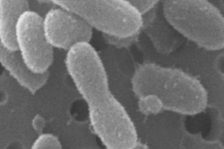 Бактерии для бензина