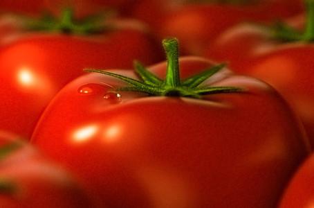 Трансгенные помидоры