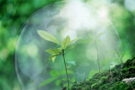 Экология мини-среды обитания человека