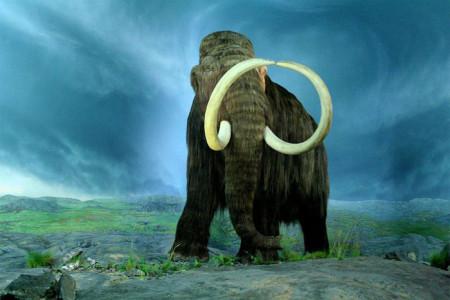 Сообщество ледникового периода найдено в Евразии