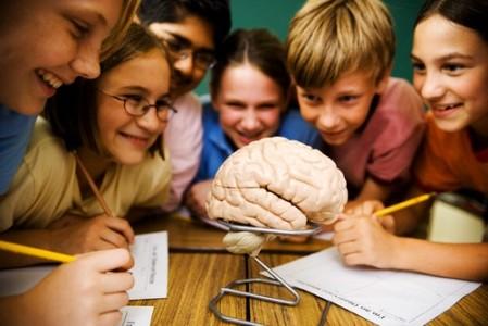 Этапы образования коры мозга