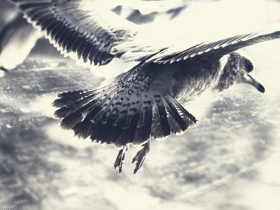 Смысл клинообразного построения птиц