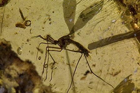 Древний комар