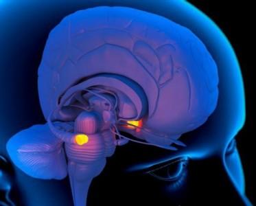 Каким образом мозг запоминает последовательность событий