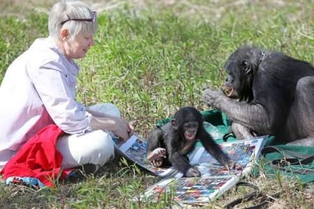 Человек и шимпанзе общались с помощью жестов