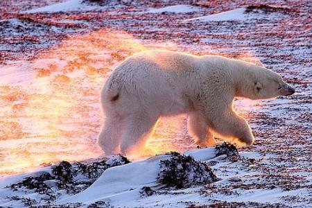 Заключение НАСА: потепление продолжалось и в 2013 году