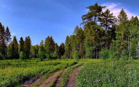 Уравновесить психическое здоровье помогает зелень