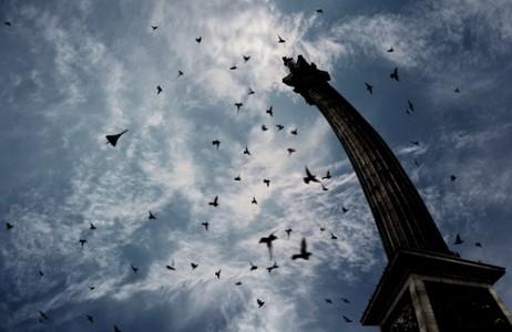 Разнообразный ландшафт позволяет птицам ориентироваться