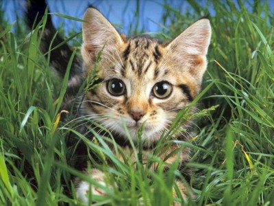 Как сделать «резиденцию» для кошки своими руками?