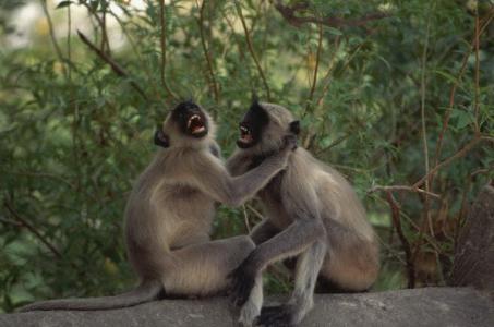 Благодаря своему энергетическому расходу приматы дольше живут
