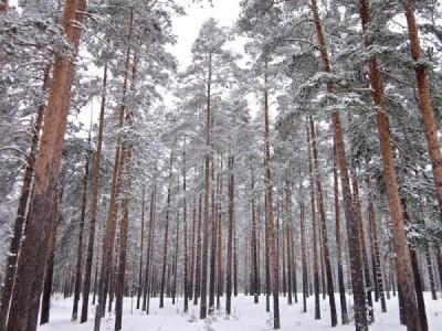 Придание Сосновому бору в Кемерово статуса особо охраняемой территории: быть или не быть?