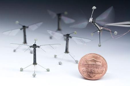 Крылатые роботы могут пролить свет на тайны полёта