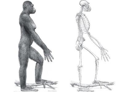 Арди - древнейший предок человека