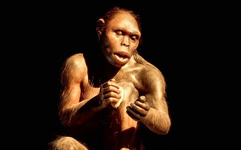 Предок человека
