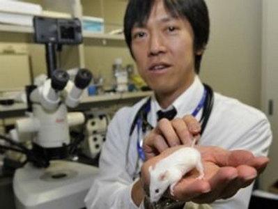 Вирус Эболы у мышей вылечивают препараты от бесплодия, рака