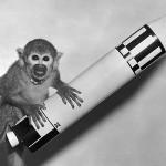 Иран отправил обезьяну в космос