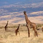 Животный мир Восточной Африки