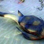 Примитивные рыбы могли кивать, не тряся головой