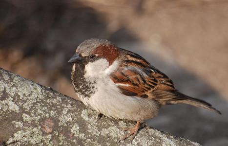 Эволюция мозга городских птиц