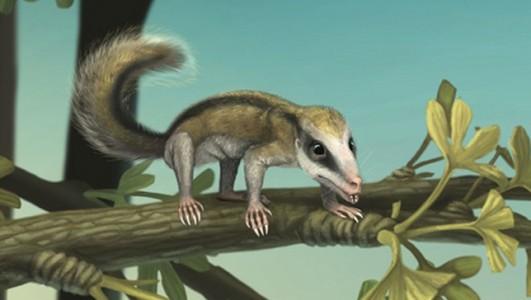 Agilodocodon scansorius