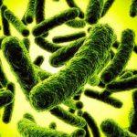 Из друзей во враги: Как безобидные бактерии становятся патогенными
