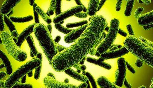 Как безобидные бактерии становятся патогенными
